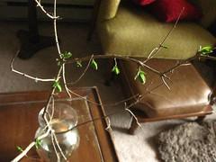 Mystery Branch