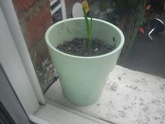 Garlic - Sharon - 26-MAR-2009