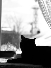 window #2 (shanti_shantislowly...) Tags: window silhouette cat ordinarylife blackandwhitejapan