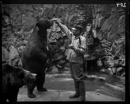 Zookeeper feeding bears in Chicago's Lincoln Park Zoo, 1900