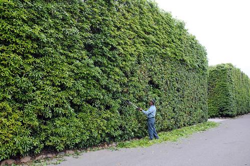 montecito gardener_5023 web
