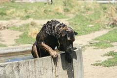 Putere Dog Trials 2 (starro_mania) Tags: newzealand dog water hawkesbay