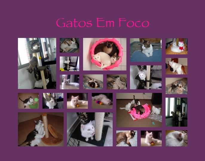 Gatos em Foco