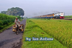 Human, Trains, and Rice Fields @ Morning Activity........ (Ian Antono-CC20327) Tags: train indonesia sawah sidoarjo geu18c kedinding cc20148 ka144gayabarumalamselatan