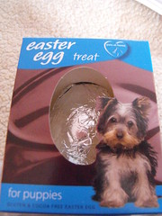 chips easter present - a chocolate egg! (RainbowBerries) Tags: life birthday nottingham 2 dog baby cute toys live treats son chip mummysboy spoilt