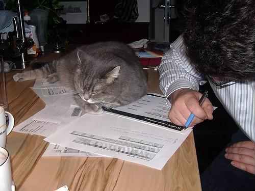 Kashim helping