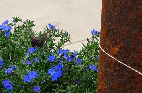cropped hummingbird