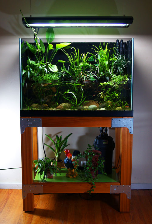 Cichlids in Planted Ripariums 10 Gallon Paludarium