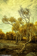 """Keheningan"" (Infrared) (2121studio) Tags: tree art nature d50 ir artwork nikon southeastasia ali malaysia infrared indah dreamworld kuantan melayu terengganu seni alam pokok karya bestphoto nikonian dungun malaysianphotographer fantasyworld drali kualaabang topphotographer visitmalaysia topimage rantauabang tanjungjara visitterengganu convertedinfraredcamera 2121studio karyaseni kuantanphotographer pahangphotographer seberangpintasan ciptaanallahswt malaysianinfraredphotographer 0139342121 alikuantan worldbestphoto facesofterengganu amazingmalaysia terengganutouristattraction tarikannegeriterengganu tempatmenarikditerengganu gambarpemandangan"