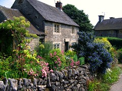 Cottage Garden in Tissington, Derbyshire (UGArdener) Tags: blue summer england english gardens garden cycling unitedkingdom britain derbyshire cottage july summertime ceanothus englishgardens tissington englishtravel