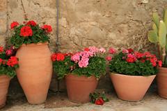 Geranei (sabrinac78) Tags: verde canon europa europe italia rosa sicily fiori piante pietra rosso colori vaso marzamemi sicilia siracusa tufo vasi geraneo geranei sicilianit
