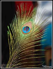Pohela Boishakh 1416 () Tags: art festival nikon tsc d60 1416 pohela nikond60 boishakh charukola   picklu pohelaboishakh1416