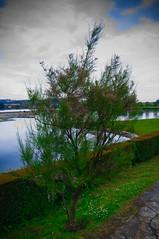 sobresaturado (Darkmelion) Tags: arbol azul burgo cielo corua coruña d90 espaa españa extremo feo galicia naturaleza paisaje paseomaritimo photoshop saturacion verde