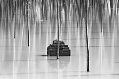 flood wave (nicola tramarin) Tags: longexposure italia flood po reflexions piena veneto rovigo lungaesposizione blackwhitephotos polesine floodwave ondadipiena nicolatramarin