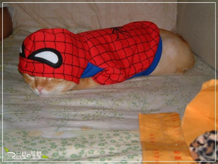 Spider-Cat_02.jpg