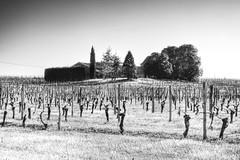 Golden Dawn (BarneyF) Tags: france tree rural landscape vineyard farm grape hdr photomatix 3exp 3exposure lacitadelle