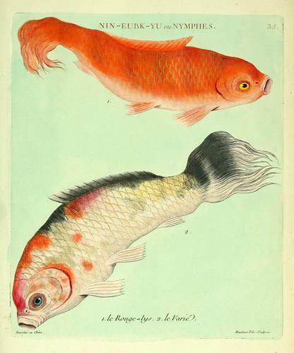 018-El lis rojo y el Variado-Histoire naturelle des dorades de la Chine-Martinet 1780
