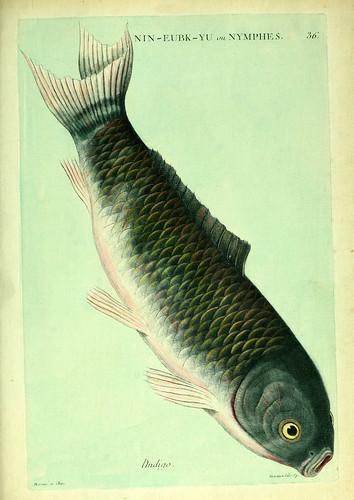 019- El Indigo-Histoire naturelle des dorades de la Chine-Martinet 1780