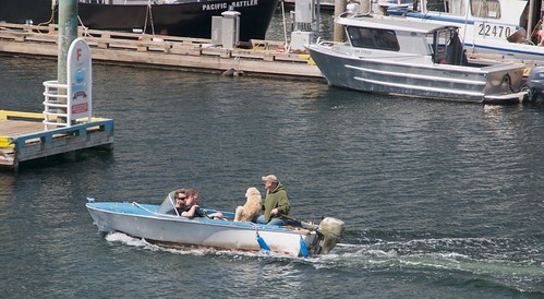 canada britishcolumbia nanaimo vancouverisland runabout nanaimoharbour boatdog nanaimobc