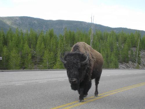 Yellowstone Travel Tips Usa Today