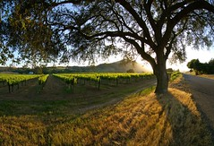 Sun Setting on Napa Valley (thombo2) Tags: california sunset panorama color composite d50 landscape vineyard vines nikon wine sonoma wideangle tokina winery valley napa ultrawide 11mm winecountry pac