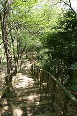 生田緑地(Ikuta Ryokuhi, Japan)