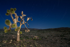 Lightning Flats, Joshua Tree National Park #2 (After Dark Photo) Tags: longexposure nightphotography lightpainting nationalpark nocturnal nightshot desert joshuatree fullmoon highdesert mojave nocturne startrails joshuatreenationalpark nightshooting geologytourroad specland zeiss21mm canon5dmarkii manzogranite offroadphotography