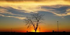 Sun, Tree, and Clouds (1suncityboi) Tags: