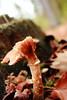 26 oktober 2013 (RW-V) Tags: autumn mushrooms herbst herfst pilze apeldoorn paddestoelen champignons canonefs1755mmf28isusm orderbos canoneos60d lautumne