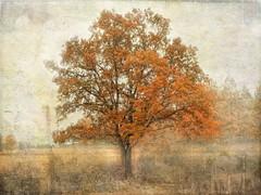 Colors of autumn. (Bessula) Tags: autumn tree art texture nature sweden country creative höst träd contry bessula creativemindsphotography bestcapturesaoi ruby10 jesuscmsfavoritesgallery inspiringcreativeminds
