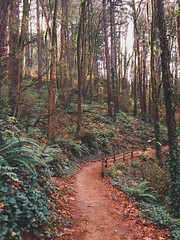 Forest Park (mlee525) Tags: autumn trees nature oregon forest portland trails forestpark iphone vscocam uploaded:by=flickrmobile flickriosapp:filter=nofilter