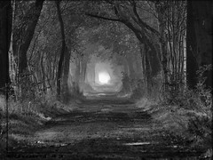 nd_191_08112013_10'51 (eduard43) Tags: trees germany landscape deutschland bog landschaft bäume niedersachsen lowersaxony baumallee treelinedavenue bwartaward moorgebiet