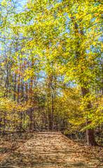 hemlock_bluffs_10 (kornopolis) Tags: autumn trees fall colors sony bluffs hemlock hdr luminance slta58