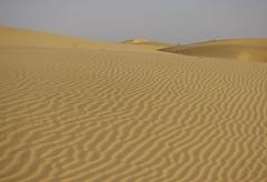 Désert du Thar : ondulations du sable (Larch) Tags: désert desert désertduthar thar sable sand vague wave bhārat bhāratgaṇarājya भारत भारतगणराज्य inde india dune khuri simplysuperb ripplemarks ripples ondulations jaisalmer