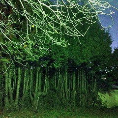 """Surreal lighting. #nofilter • <a style=""""font-size:0.8em;"""" href=""""https://www.flickr.com/photos/61640076@N04/10988799275/"""" target=""""_blank"""">View on Flickr</a>"""