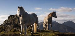 High Horses - Explored (Nick Livesey Mountain Images) Tags: