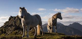 High Horses - Explored