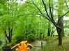 Charizard in Hiroshima, Hiroshima 5 (Shukkei-en Garden) (Kasadera) Tags: toys hiroshima figure pokemon pokémon 広島 charizard 神奇寶貝 ポケモン glurak 縮景園 shukkeiengarden pokemonkids 噴火龍 寵物小精靈 dracaufeu リザードン ポケモンキッズ 리자몽
