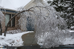 ice storm (3 of 6) (betsyweber) Tags: trees winter snow storm cold ice mi happy holidays michigan merry icy okemos techsmith puremichigan