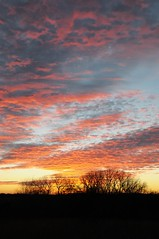 Year End Sunset 1 (thefisch1) Tags: sunset canada color bird clouds geese nikon colorful calendar vibrant unique flight refraction kansas canadagoose d300 calendarpics