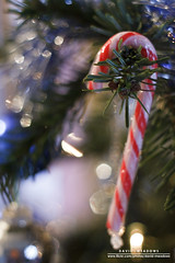 Candy Cane (DMeadows) Tags: christmas blue red white tree cane silver festive focus candy sweet bokeh branches seasonal decoration sugar tinsel fir sweets stick needles bauble spruce davidmeadows dmeadows davidameadows dameadows