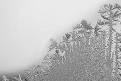 Frosty Morning | 363/365 2013 (mfhiatt) Tags: winter ice window glass frost december frosty day363 day363365 3652013 mfhiatt 365the2013edition ©2013michaelfhiatt 29dec13 img44611213jpg