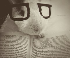 noir nerdy pig (Lady_Heron) Tags: pet cute fun book guineapig blackwhite funny noir cutie read lovely cuteness petme