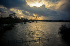 Where once were fields (John Willoughby) Tags: bridge trees water thames river way flood south under oxfordshire wallingford freshwater crowmarsh nosworthy a4130