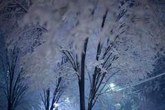 IMG_5624 (Thomo13) Tags: street white snow storm japan night tokyo yuki roppongi 2014 gettyimagesjapan14q1 {vision}:{sky}=0846 {vision}:{mountain}=0637 {vision}:{outdoor}=0981