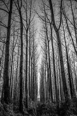 Bords de Nive. (Jérôme Cousin) Tags: trees bw black tree monochrome nikon noir w nb 64 arbres 28 tamron et arbre pays blanc basque euskadi pyrenees euskal herria atlantiques 2470 herri d700