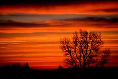 2014-02-24 Flot morgenhimmel (2) (Sigurd Jensen) Tags: morning tree sol birds sunrise morgen solopgang