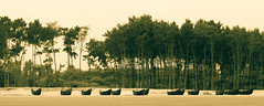 Fishing boats lined up ashore Udaypur beach near Digha, India (Supratim Ghatak) Tags: boat fishermen forrest digha canonpowershotsx110is jhau