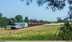 SNCF FRET 467629 + 467597 @ Ripain (Wouter De Haeck) Tags: belgique belgië cargo sncf brabantwallon tubize sociéténationaledescheminsdeferfrançais clabecq waalsbrabant l115 sncffret bb67000 brissonneauetlotz infrabel tergnier steenslag quenast ripain clabecqmarchandises