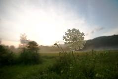 Catskills landscapes (minka6) Tags: summer catskills d300 1116mmf28